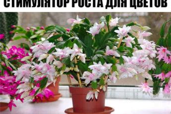 СТИМУЛЯТОР РОСТА для цветов